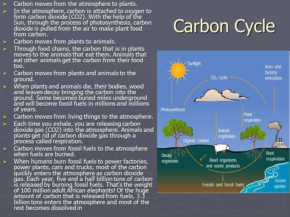 Carbon Cycle Carbon moves from the atmosphere to plants.