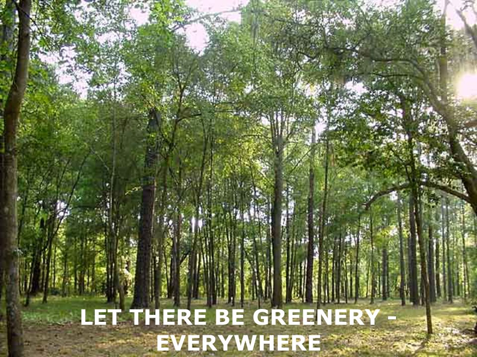 LET THERE BE GREENERY - EVERYWHERE