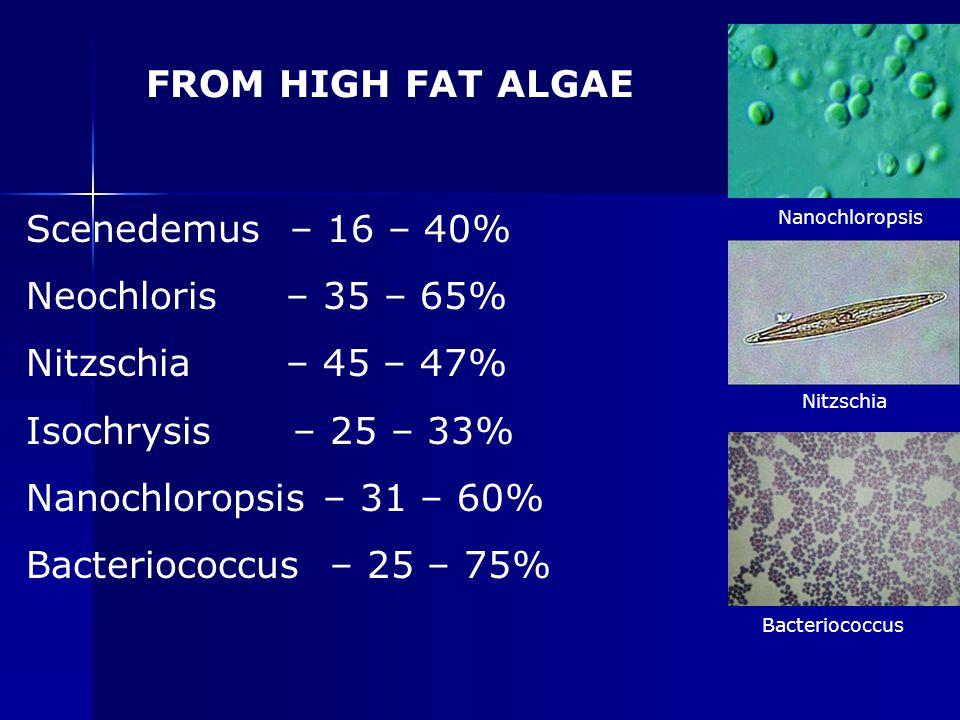 Nanochloropsis Nitzschia Bacteriococcus FROM HIGH FAT ALGAE Scenedemus – 16 – 40% Neochloris – 35 – 65% Nitzschia – 45 – 47% Isochrysis – 25 – 33% Nan