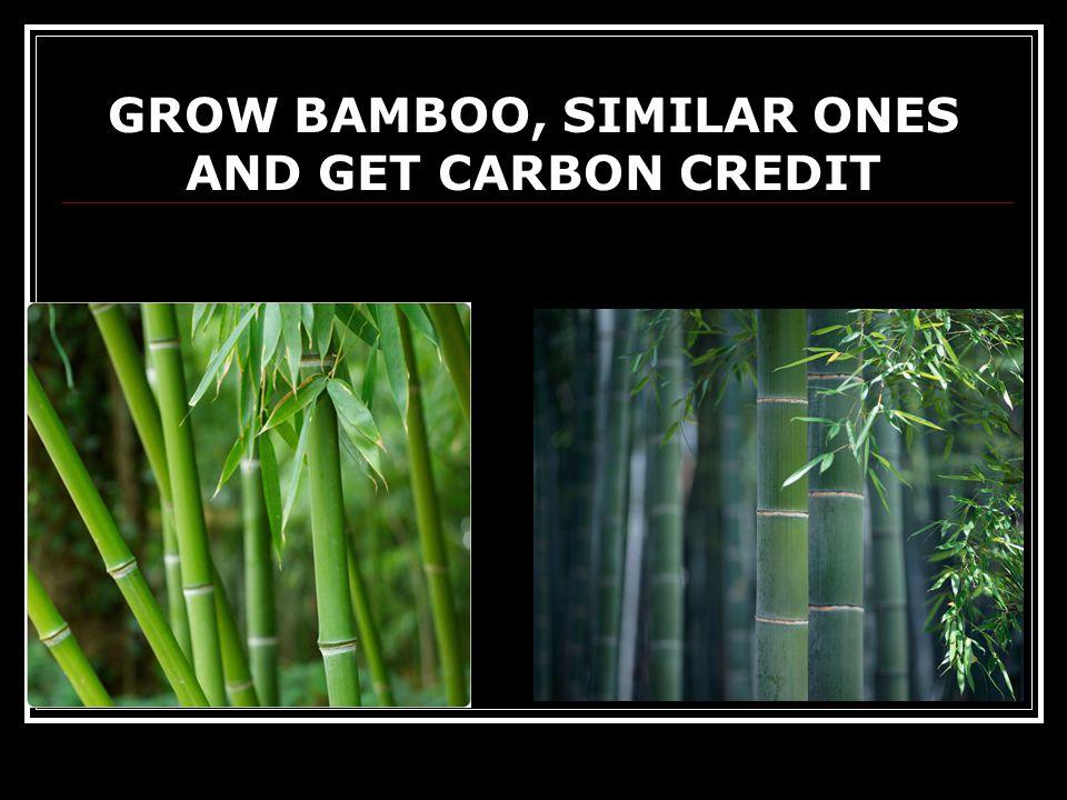 GROW BAMBOO, SIMILAR ONES AND GET CARBON CREDIT