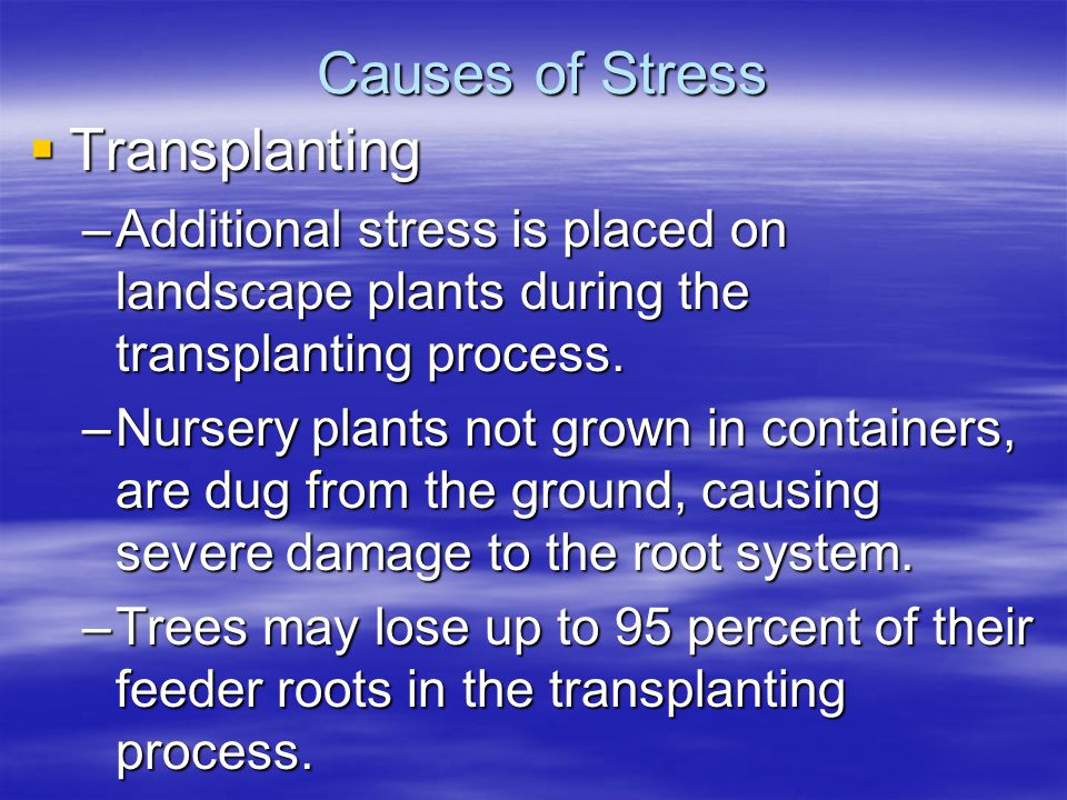 Causes of Stress Transplanting Transplanting –Additional stress is placed on landscape plants during the transplanting process. –Nursery plants not gr