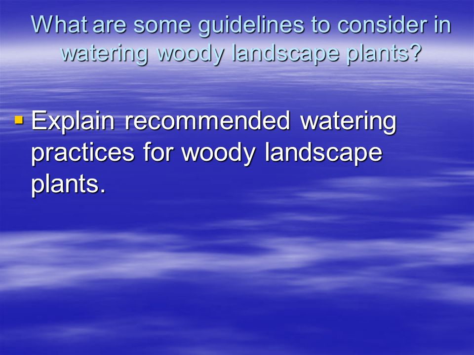 What are some guidelines to consider in watering woody landscape plants? Explain recommended watering practices for woody landscape plants. Explain re