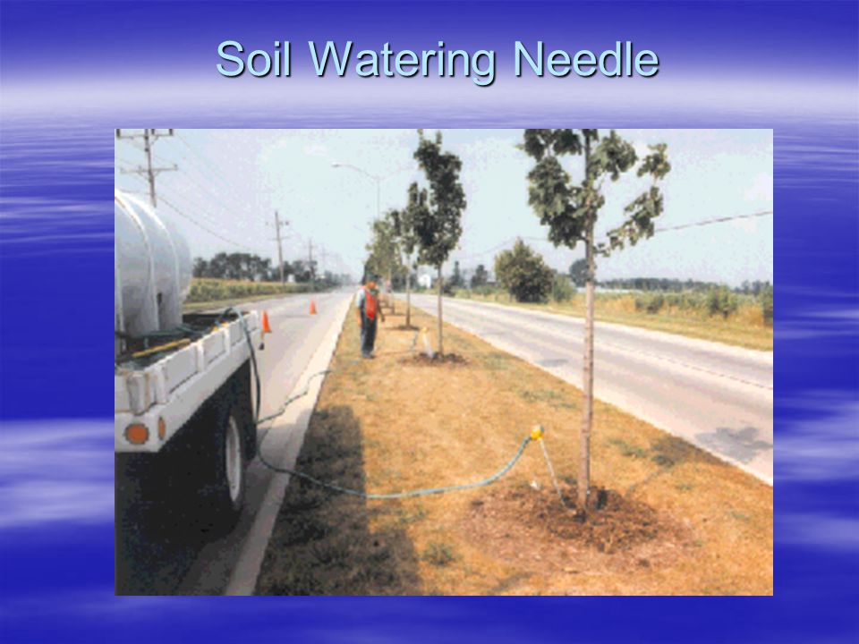 Soil Watering Needle