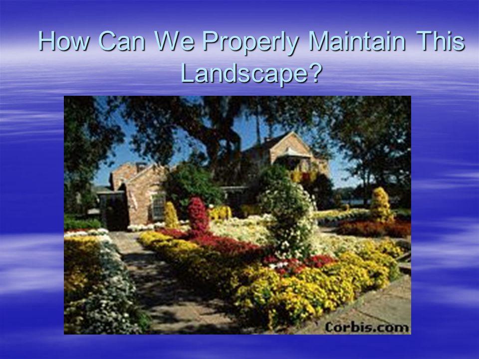How Should Woody Landscape Plants be Fertilized.