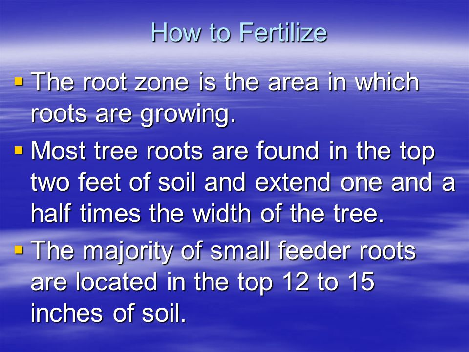How to Fertilize The root zone is the area in which roots are growing. The root zone is the area in which roots are growing. Most tree roots are found