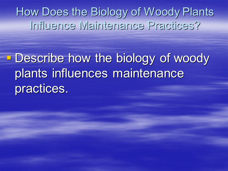 How Does the Biology of Woody Plants Influence Maintenance Practices? Describe how the biology of woody plants influences maintenance practices. Descr