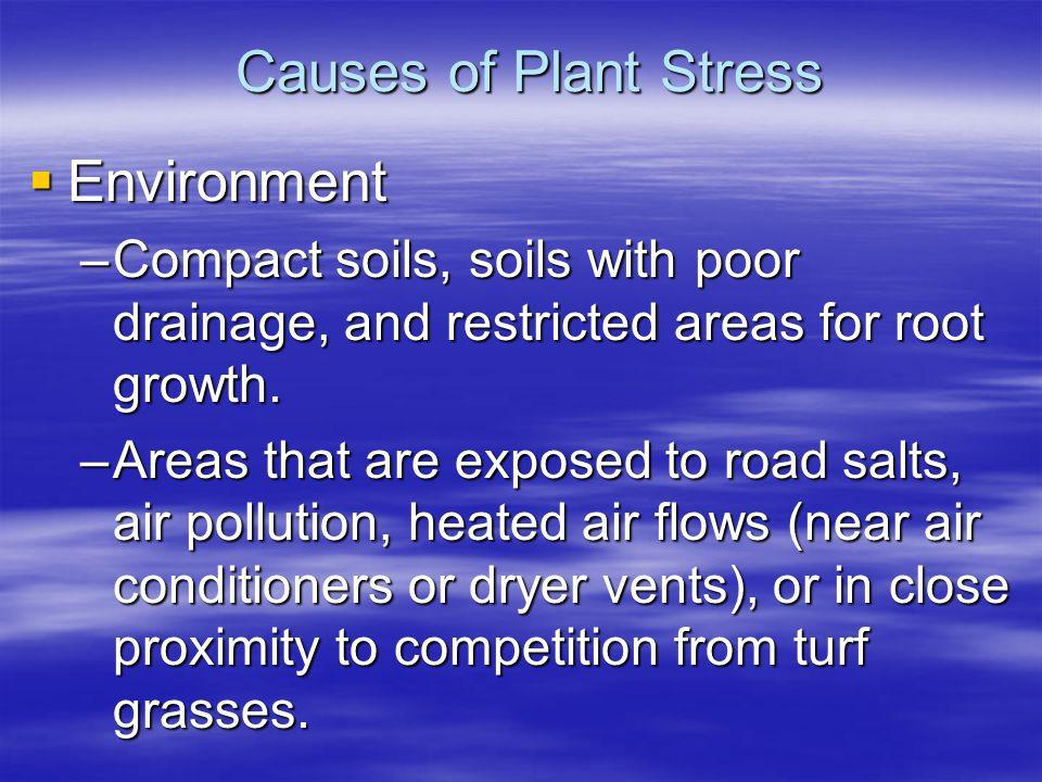 Dry Fertilizer in Holes