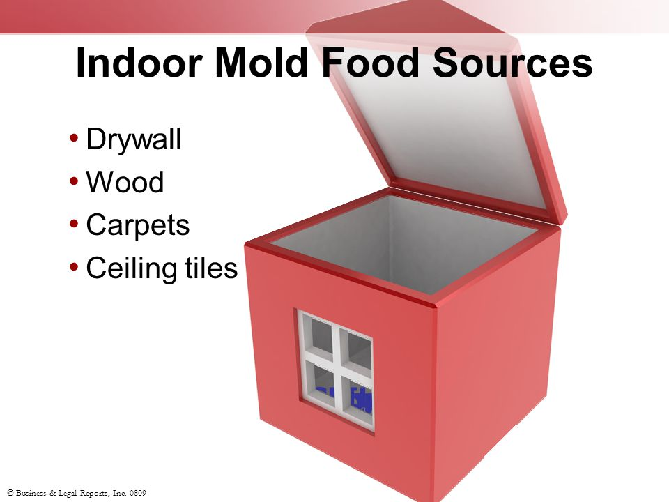 © Business & Legal Reports, Inc.0809 Preventing Mold: Which Procedures Are Effective.