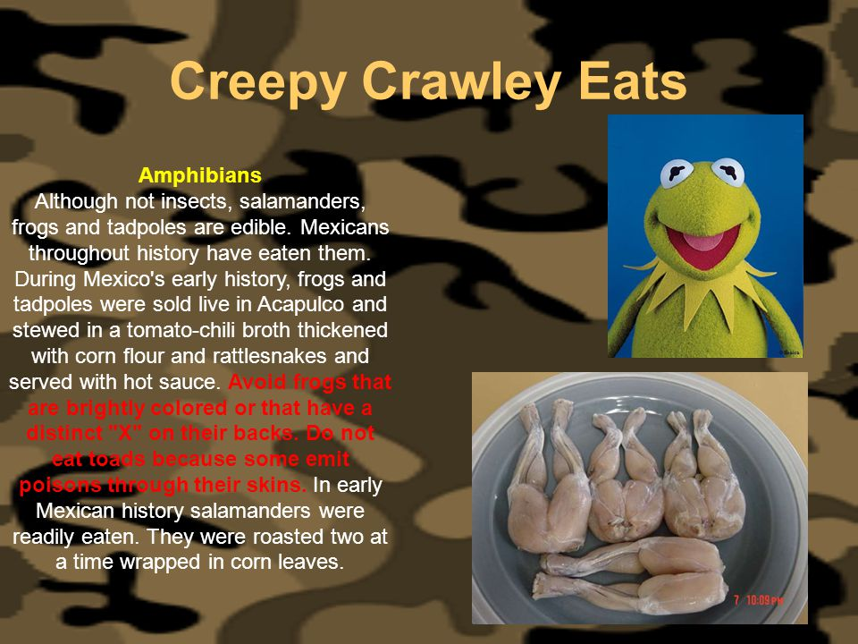 Creepy Crawley Eats Amphibians Although not insects, salamanders, frogs and tadpoles are edible. Mexicans throughout history have eaten them. During M