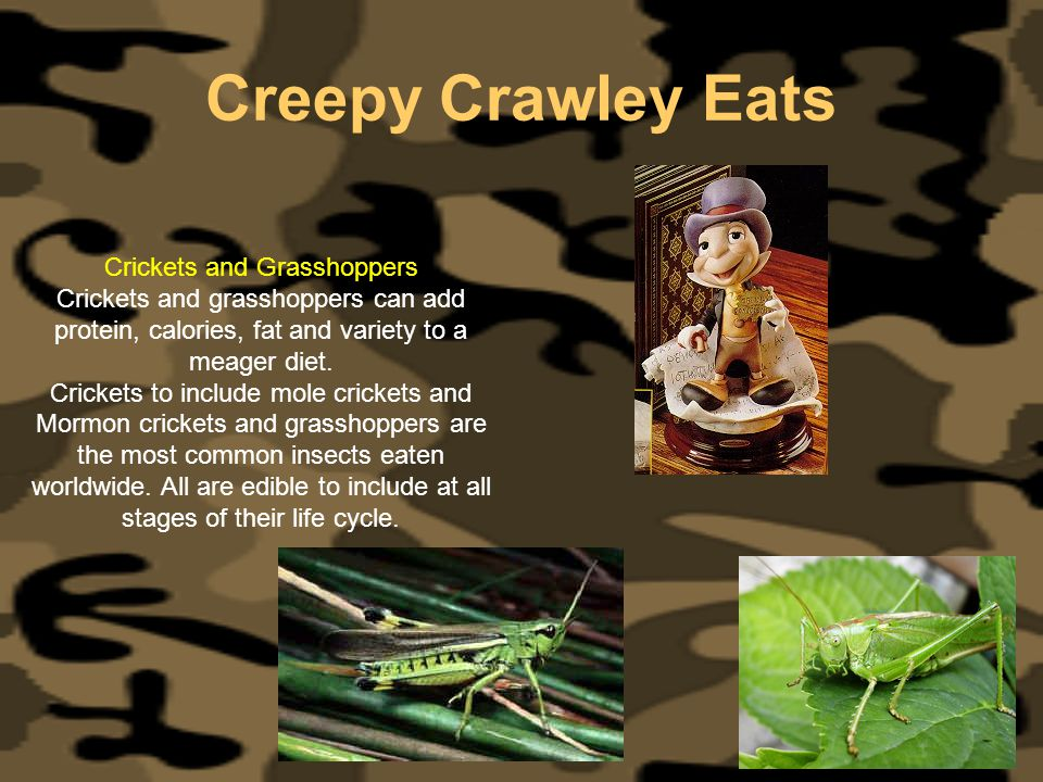 Creepy Crawley Eats Crickets and Grasshoppers Crickets and grasshoppers can add protein, calories, fat and variety to a meager diet. Crickets to inclu