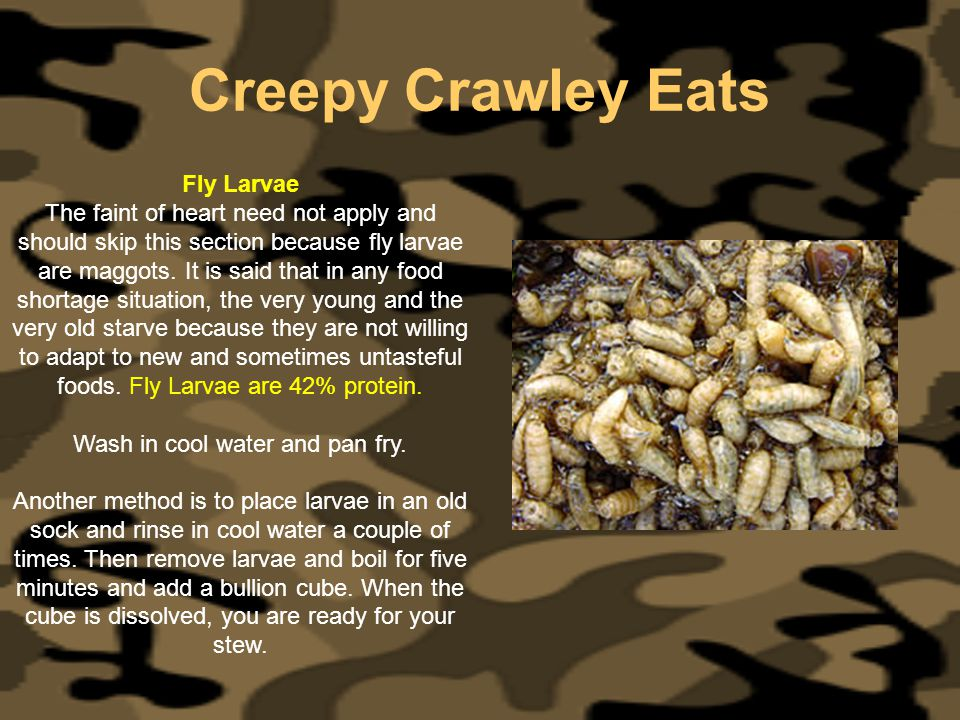 Creepy Crawley Eats Fly Larvae The faint of heart need not apply and should skip this section because fly larvae are maggots. It is said that in any f