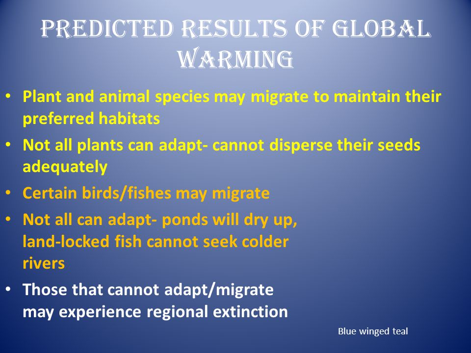 Predicted Results Of Global Warming Plant and animal species may migrate to maintain their preferred habitats Not all plants can adapt- cannot dispers
