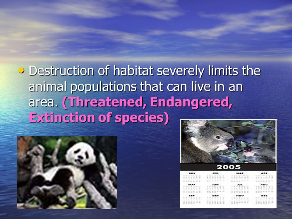 Destruction of habitat severely limits the animal populations that can live in an area. (Threatened, Endangered, Extinction of species) Destruction of