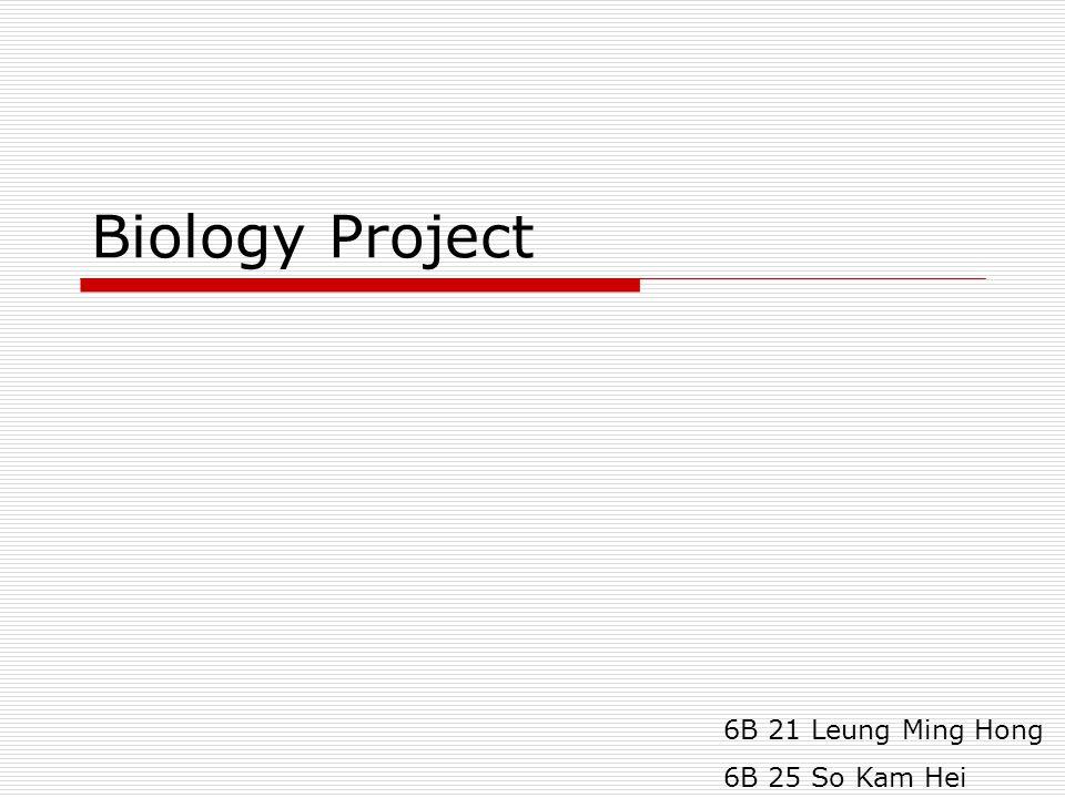 Biology Project 6B 21 Leung Ming Hong 6B 25 So Kam Hei