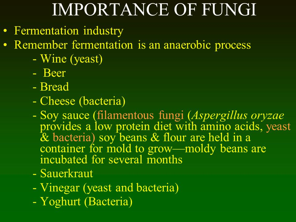 IMPORTANCE OF FUNGI Fermentation industry Remember fermentation is an anaerobic process -Wine (yeast) - Beer -Bread -Cheese (bacteria) -Soy sauce (fil