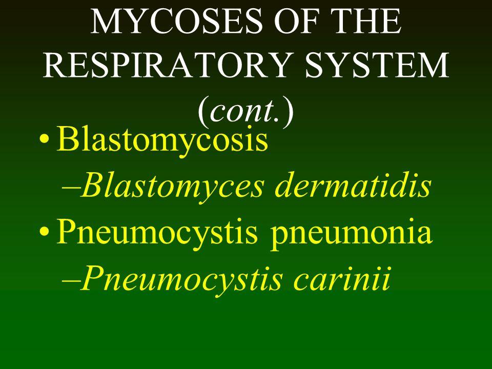 MYCOSES OF THE RESPIRATORY SYSTEM (cont.) Blastomycosis –Blastomyces dermatidis Pneumocystis pneumonia –Pneumocystis carinii