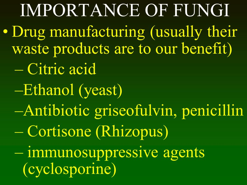 IMPORTANCE OF FUNGI Drug manufacturing (usually their waste products are to our benefit) – Citric acid –Ethanol (yeast) –Antibiotic griseofulvin, peni