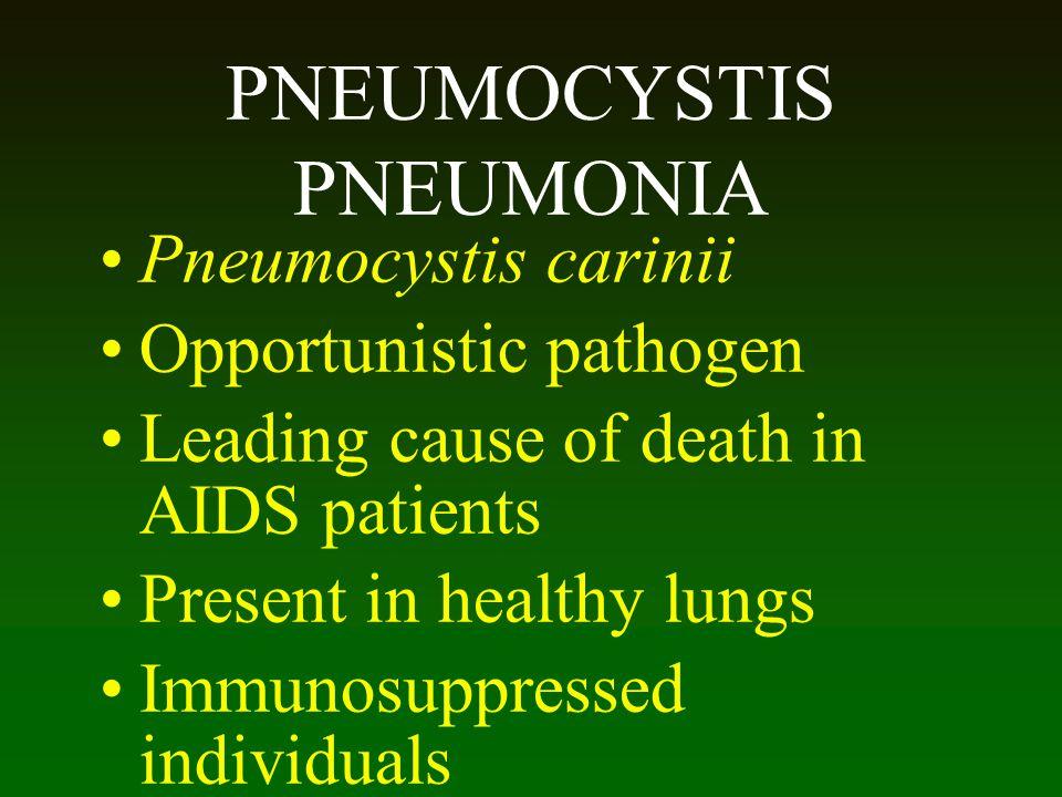 PNEUMOCYSTIS PNEUMONIA Pneumocystis carinii Opportunistic pathogen Leading cause of death in AIDS patients Present in healthy lungs Immunosuppressed i