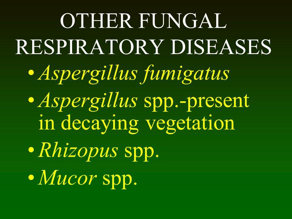 OTHER FUNGAL RESPIRATORY DISEASES Aspergillus fumigatus Aspergillus spp.-present in decaying vegetation Rhizopus spp. Mucor spp.