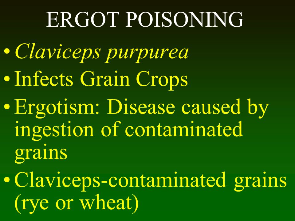 ERGOT POISONING Claviceps purpurea Infects Grain Crops Ergotism: Disease caused by ingestion of contaminated grains Claviceps-contaminated grains (rye