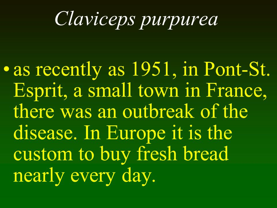 Claviceps purpurea as recently as 1951, in Pont-St. Esprit, a small town in France, there was an outbreak of the disease. In Europe it is the custom t