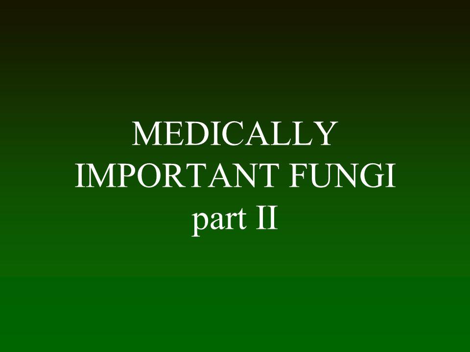 MEDICALLY IMPORTANT FUNGI part II