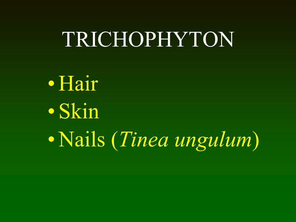 TRICHOPHYTON Hair Skin Nails (Tinea ungulum)