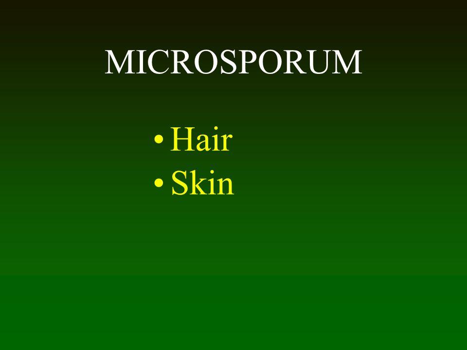MICROSPORUM Hair Skin