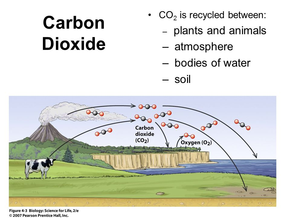 Carbon Dioxide CO 2 is recycled between: – plants and animals – atmosphere – bodies of water – soil