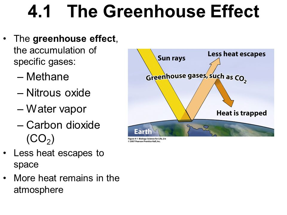4.1 The Greenhouse Effect The greenhouse effect, the accumulation of specific gases: –Methane –Nitrous oxide –Water vapor –Carbon dioxide (CO 2 ) Less heat escapes to space More heat remains in the atmosphere