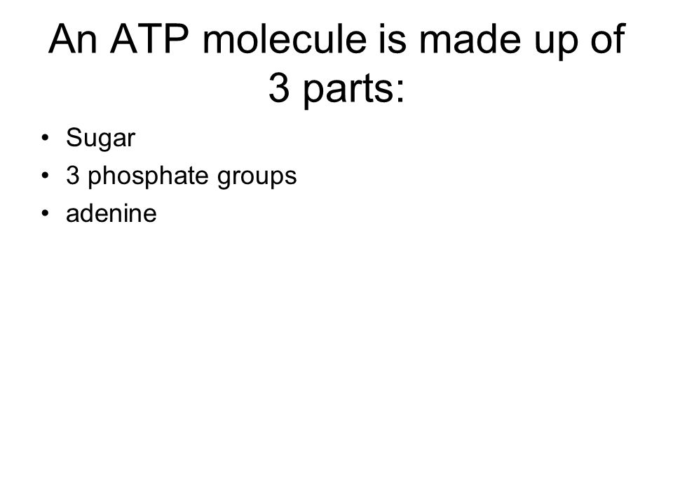 An ATP molecule is made up of 3 parts: Sugar 3 phosphate groups adenine