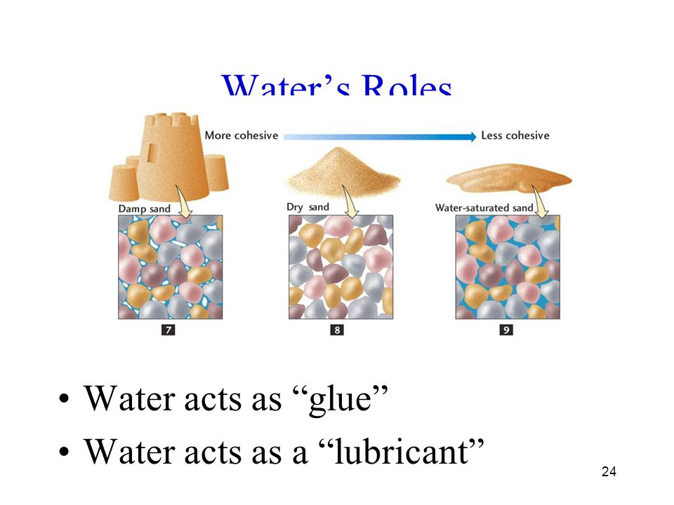 Waters Roles Water acts as glue Water acts as a lubricant 24