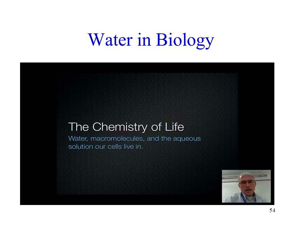Water in Biology 54