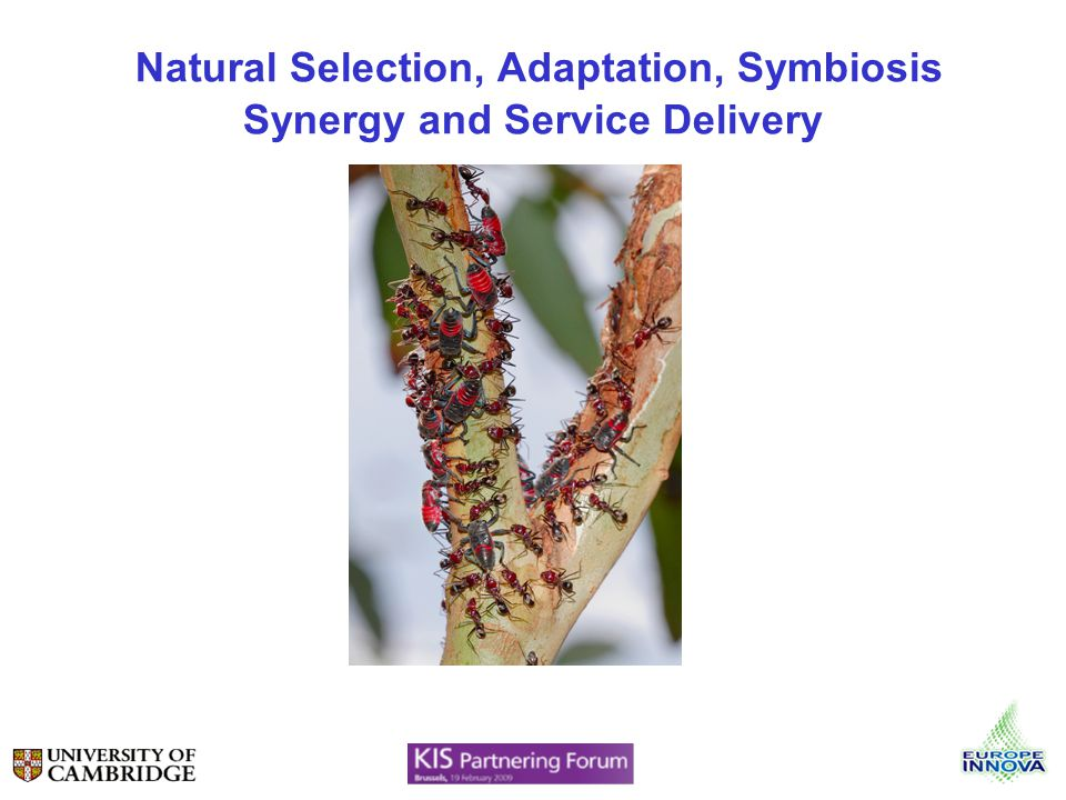 Natural Selection, Adaptation, Symbiosis Synergy and Service Delivery