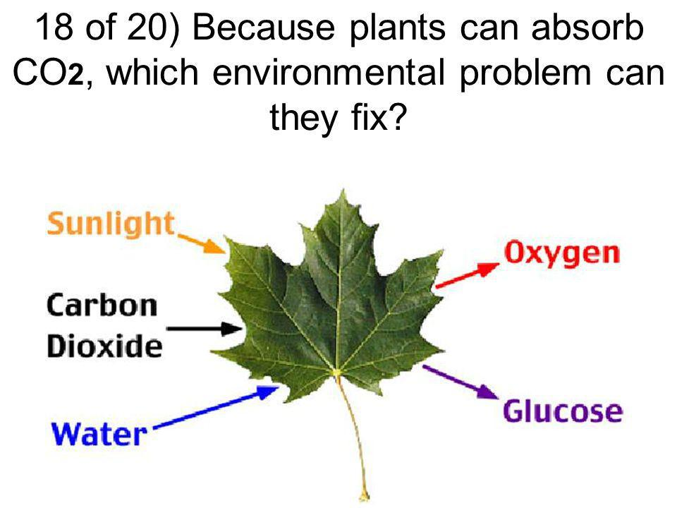 17 of 20) Where does the water come from to create east coast deciduous forests