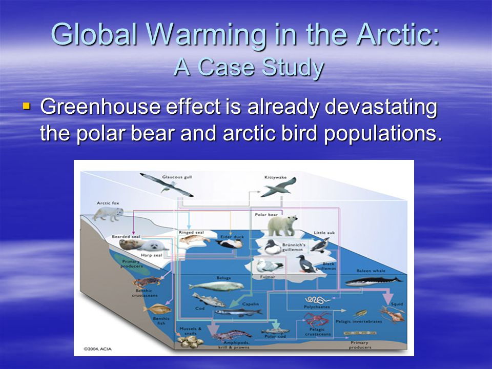 Global Warming in the Arctic: A Case Study Greenhouse effect is already devastating the polar bear and arctic bird populations. Greenhouse effect is a