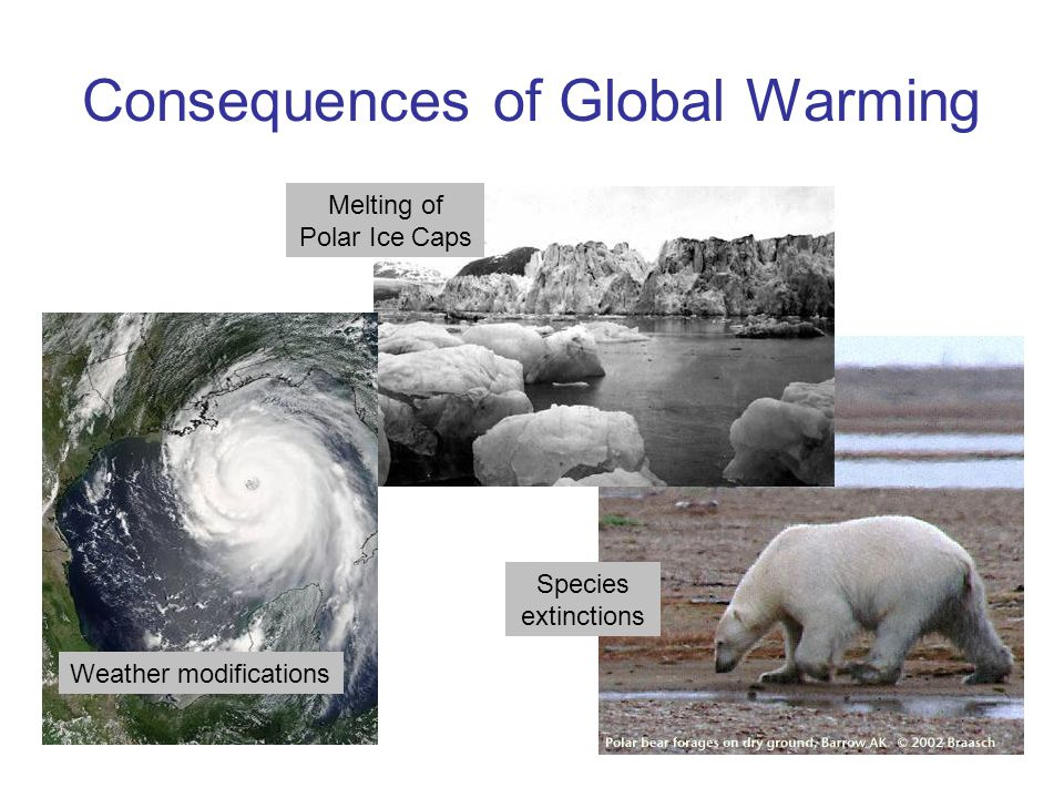 Consequences of Global Warming Weather modifications Species extinctions Melting of Polar Ice Caps