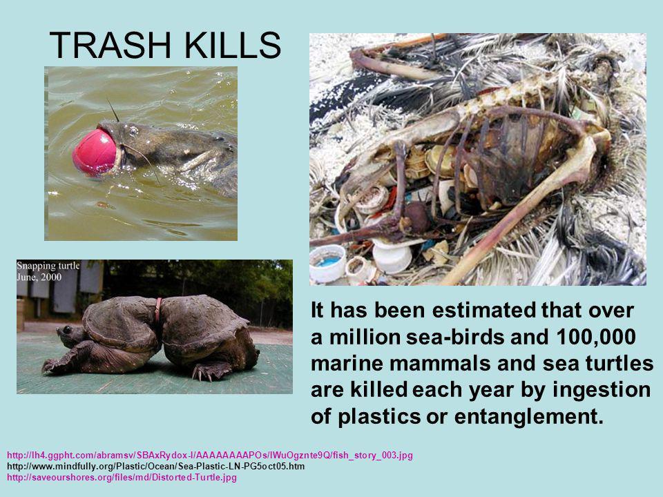 TRASH KILLS http://lh4.ggpht.com/abramsv/SBAxRydox-I/AAAAAAAAPOs/IWuOgznte9Q/fish_story_003.jpg http://www.mindfully.org/Plastic/Ocean/Sea-Plastic-LN-