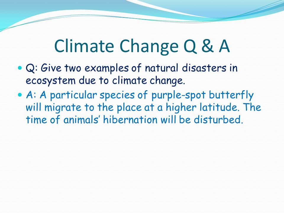Climate Change Q & A Q: Give two examples of natural disasters in ecosystem due to climate change. A: A particular species of purple-spot butterfly wi