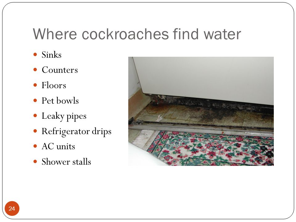 Where cockroaches find water Sinks Counters Floors Pet bowls Leaky pipes Refrigerator drips AC units Shower stalls 24