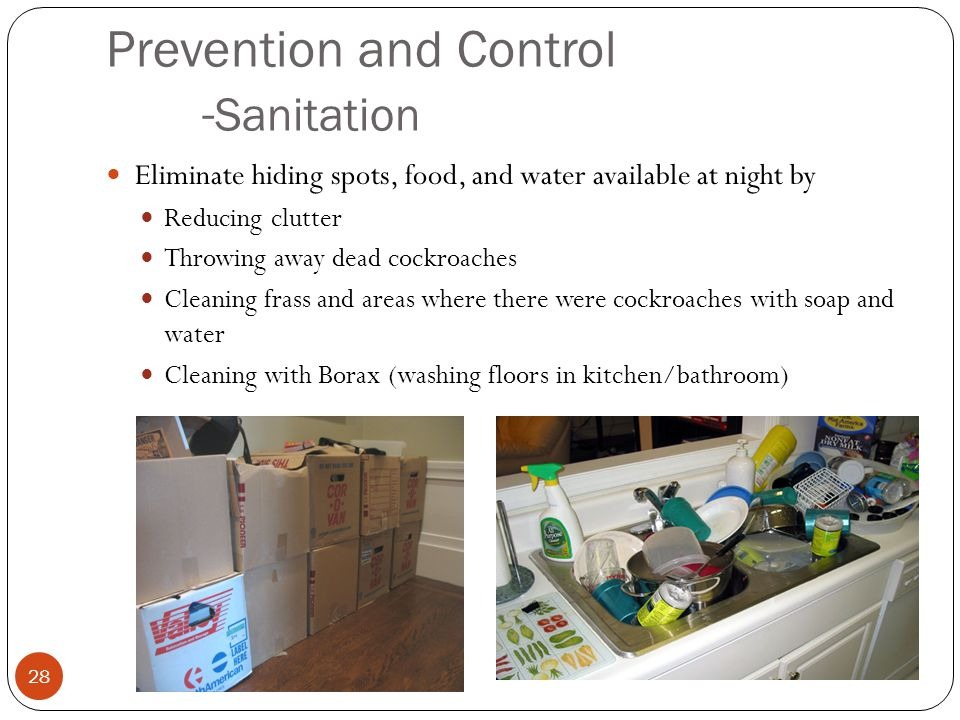Prevention and Control - Sanitation Eliminate hiding spots, food, and water available at night by Reducing clutter Throwing away dead cockroaches Cleaning frass and areas where there were cockroaches with soap and water Cleaning with Borax (washing floors in kitchen/bathroom) 28
