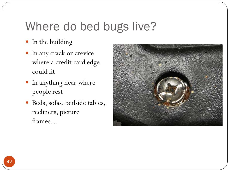 Where do bed bugs live? In the building In any crack or crevice where a credit card edge could fit In anything near where people rest Beds, sofas, bed