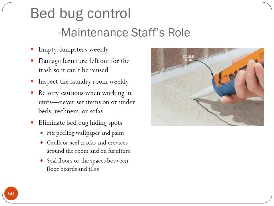 Bed bug control - Maintenance Staffs Role Empty dumpsters weekly Damage furniture left out for the trash so it cant be reused Inspect the laundry room