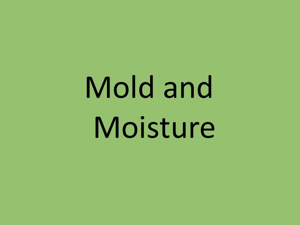 Mold and Moisture