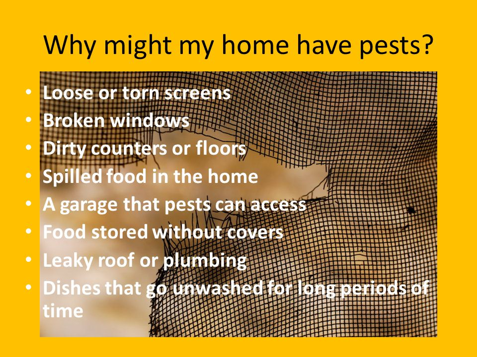 Why might my home have pests? Loose or torn screens Broken windows Dirty counters or floors Spilled food in the home A garage that pests can access Fo