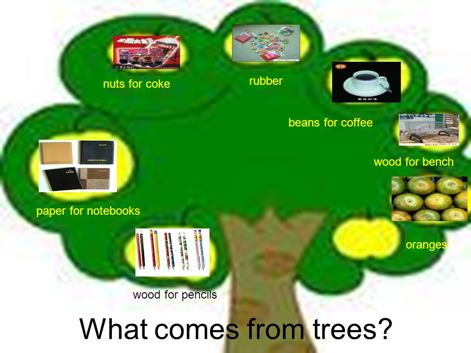 What comes from trees? nuts for coke rubber beans for coffee wood for bench oranges wood for pencils paper for notebooks