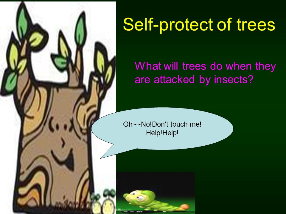 Self-protect of trees Oh~~No!Don't touch me! Help!Help! What will trees do when they are attacked by insects?