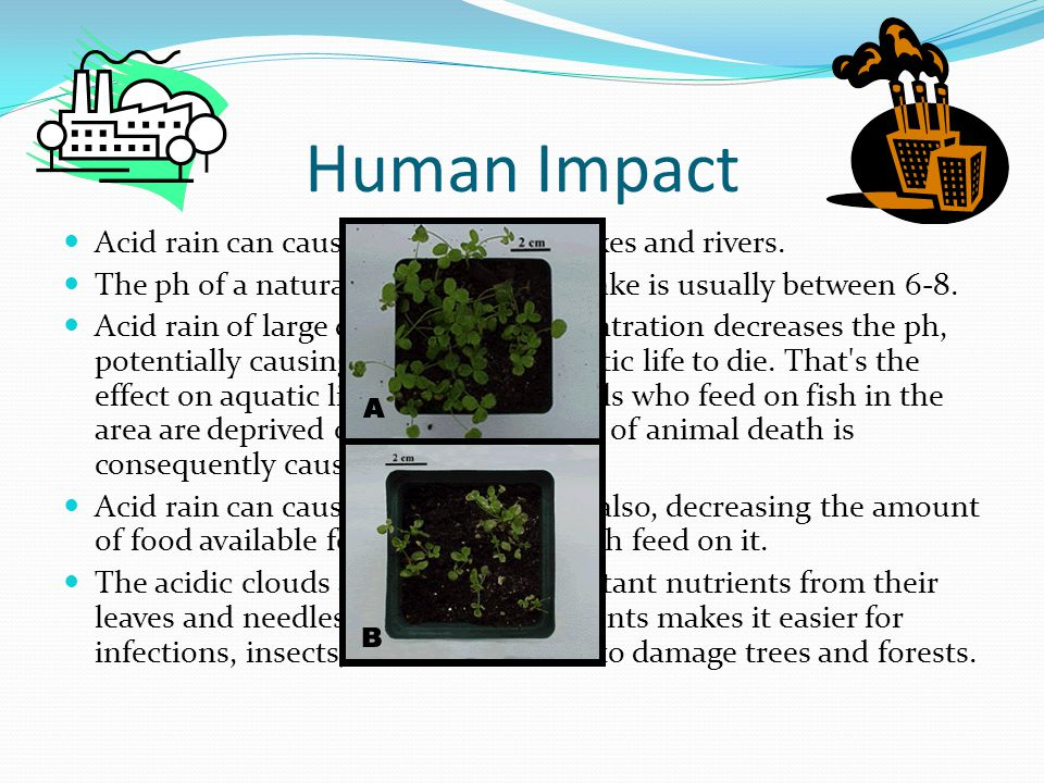 Human Impact Acid rain can cause high acidity in lakes and rivers. The ph of a naturally neural river or lake is usually between 6-8. Acid rain of lar