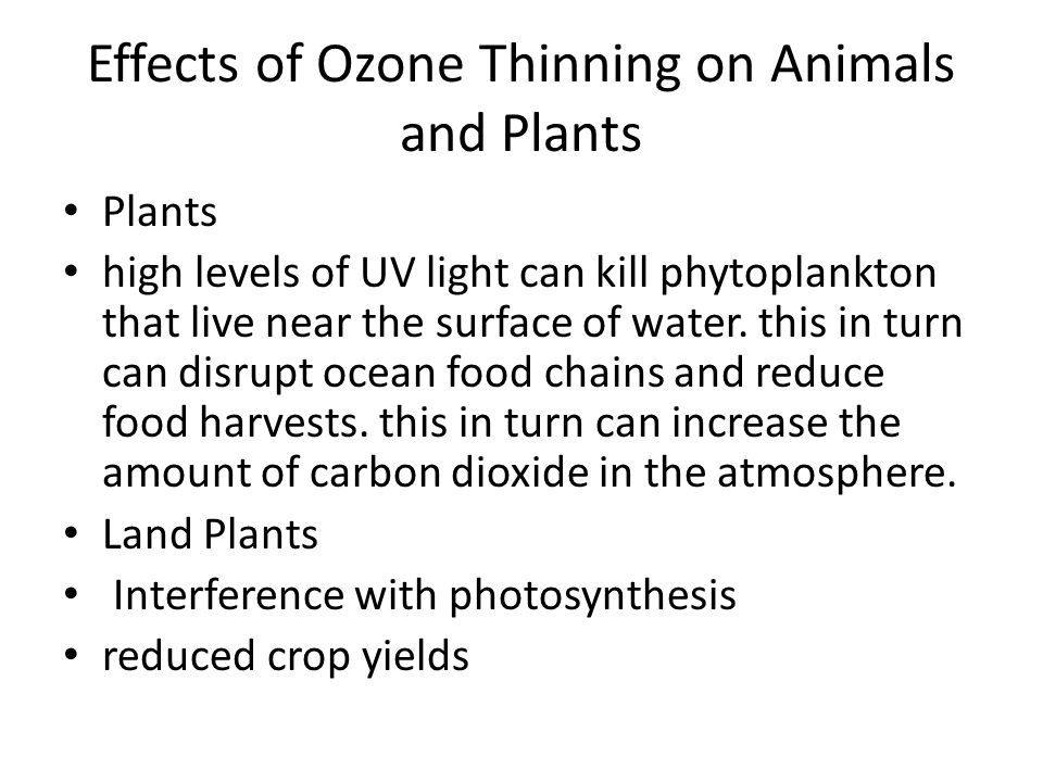 Effects of Ozone Thinning on Animals and Plants Plants high levels of UV light can kill phytoplankton that live near the surface of water. this in tur