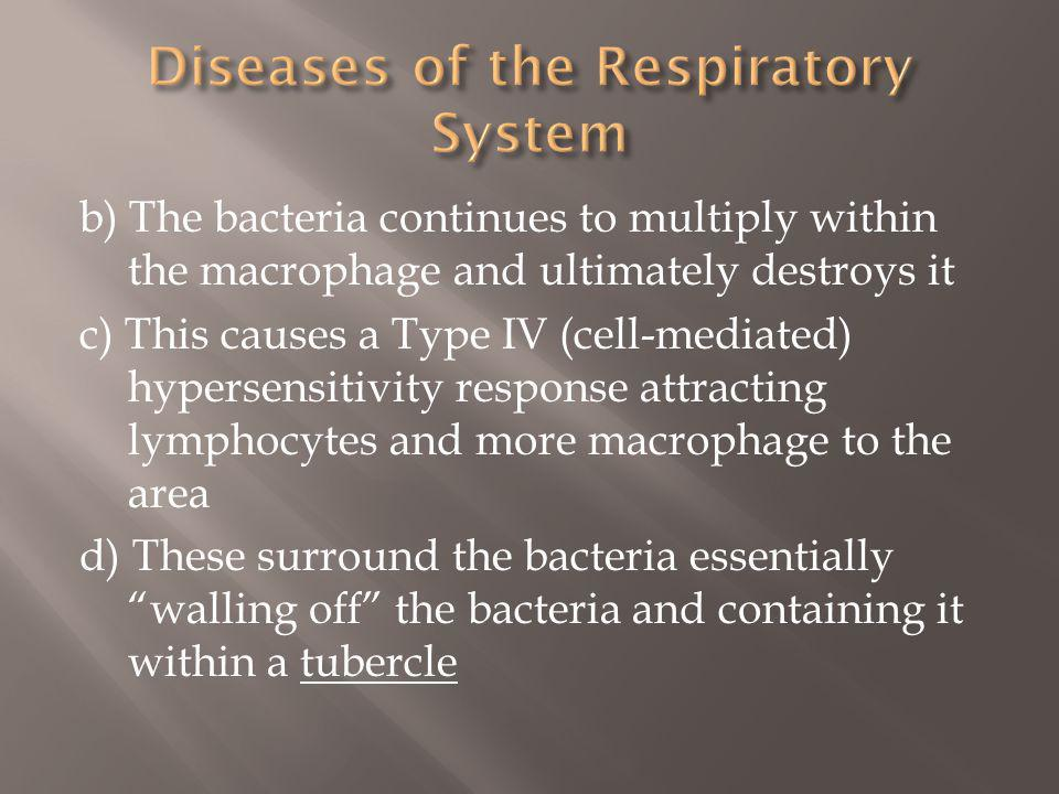b) The bacteria continues to multiply within the macrophage and ultimately destroys it c) This causes a Type IV (cell-mediated) hypersensitivity response attracting lymphocytes and more macrophage to the area d) These surround the bacteria essentially walling off the bacteria and containing it within a tubercle
